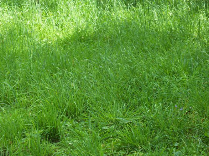 grass shadow green wallpaper
