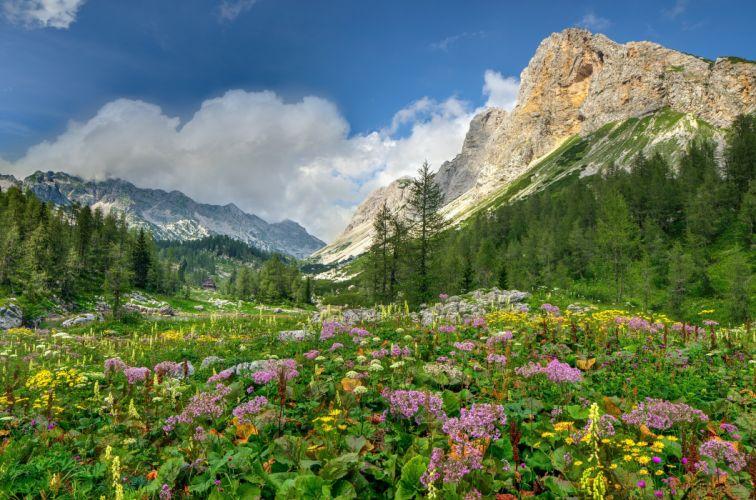 Flowers mountain meadows Alps mountains trees landscape wallpaper
