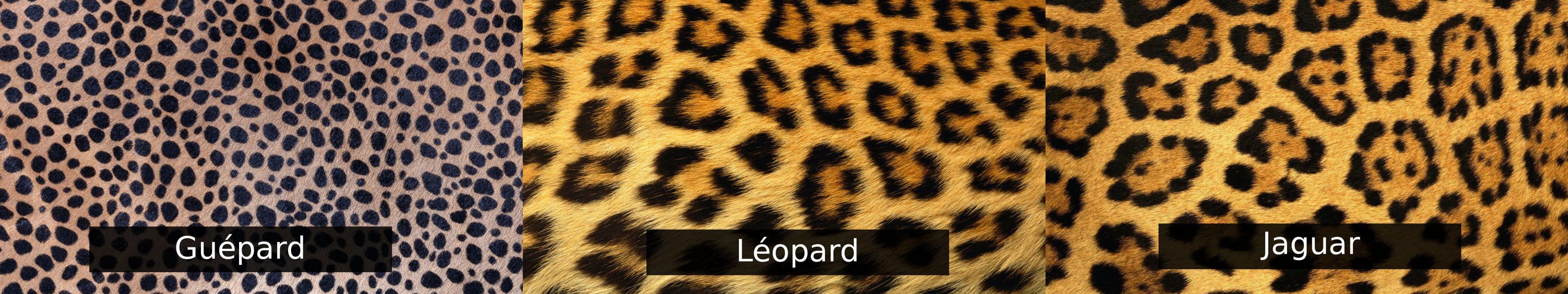 wallpaper triple multi multiple monitor screen leopard jaguar gepard cheetah wallpaper