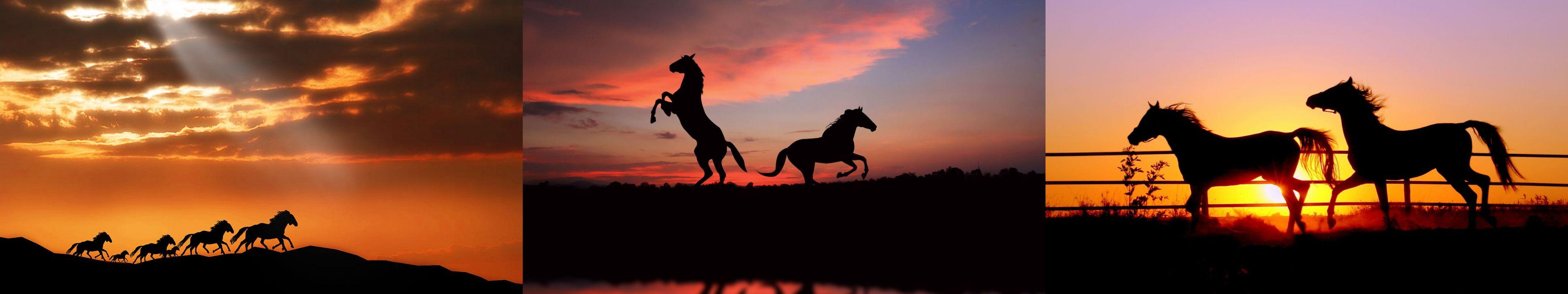 wallpaper triple multi multiple monitor screen horse cheval sunset  wallpaper