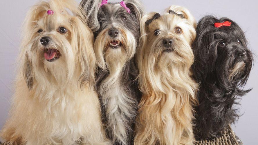 dogs cute animal buckle wallpaper