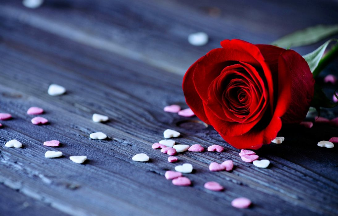Roses Flowers Love Romance Red Hearts Emotions For Girls Lovers
