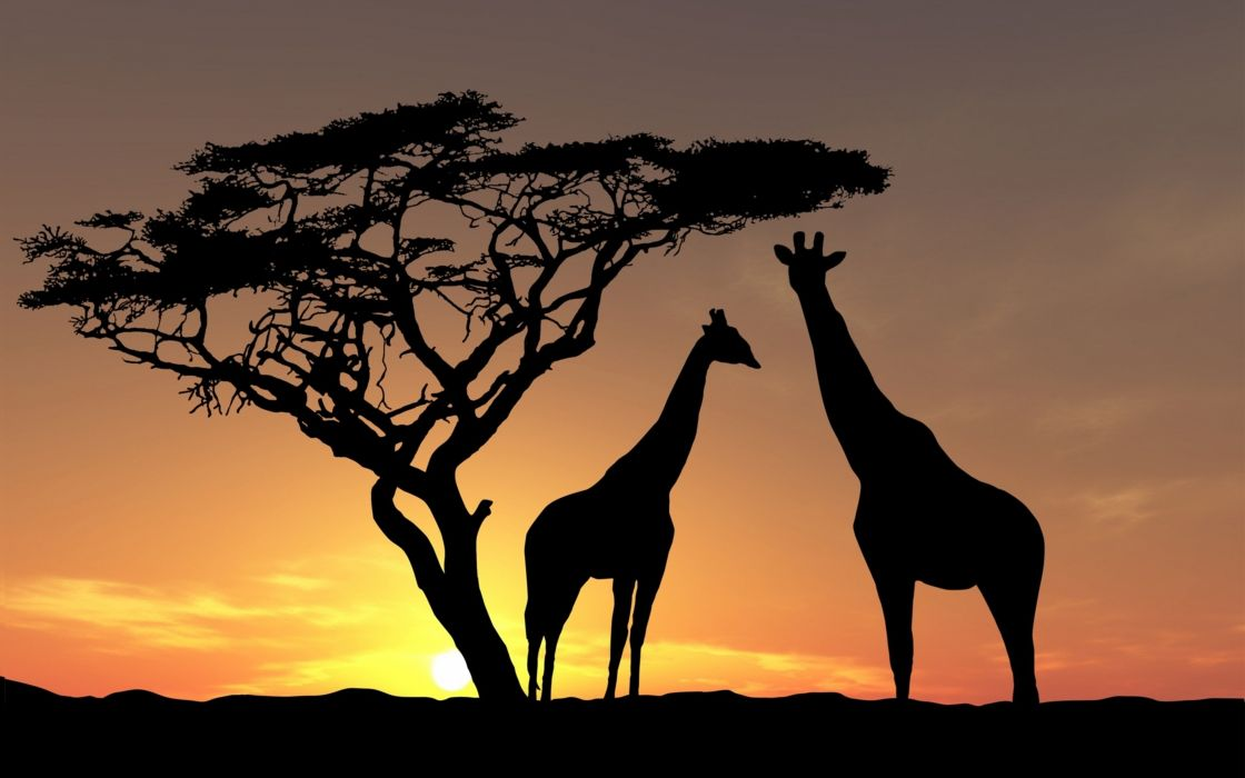sunset shadows animals fauna giraffes African wood yellow-brown background landscapes nature wild wallpaper