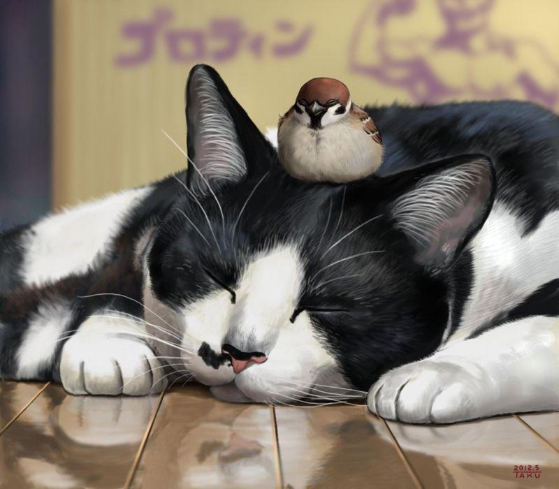 animal cute cat bird sparrow wallpaper