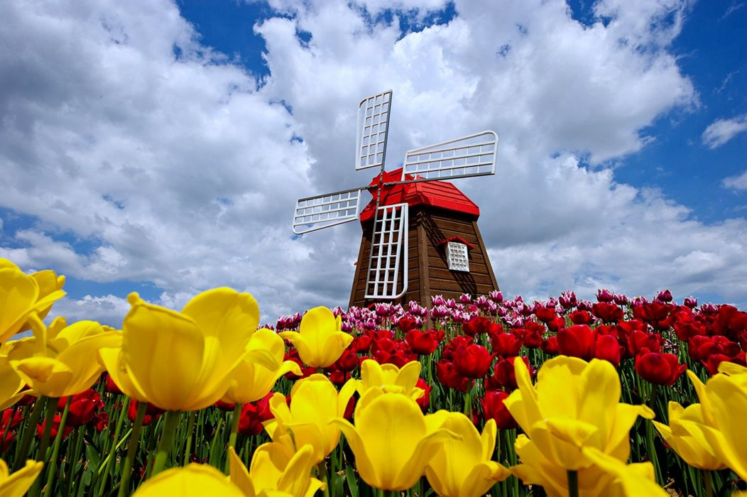 nature windmill sky clouds spring flowers tulips nature landscaps roses red yellow beauty wallpaper