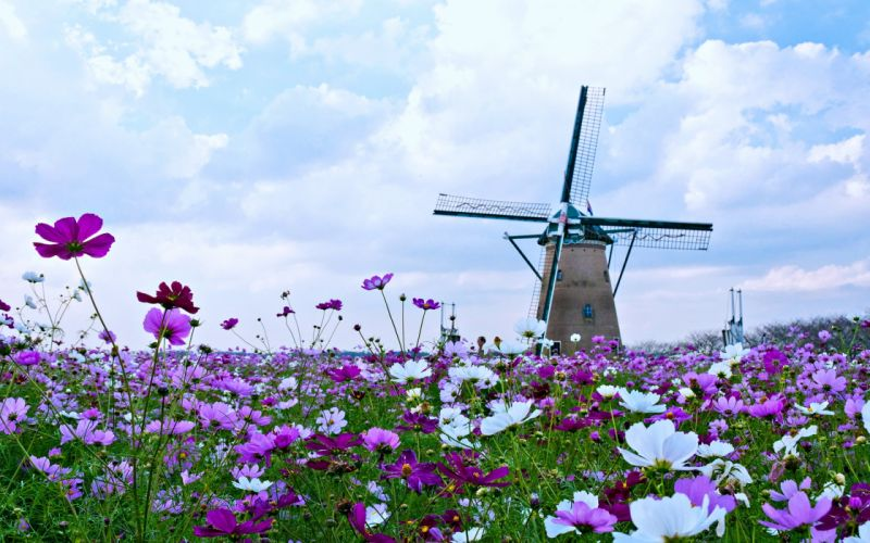 Beauty clouds Flowers landscaps nature red roses sky Spring tulips windmill Yellow wallpaper