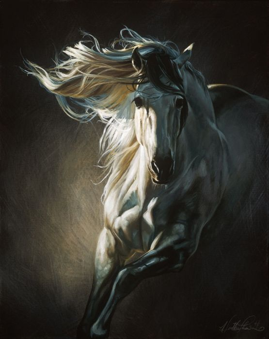 art horse white beautiful animal wallpaper