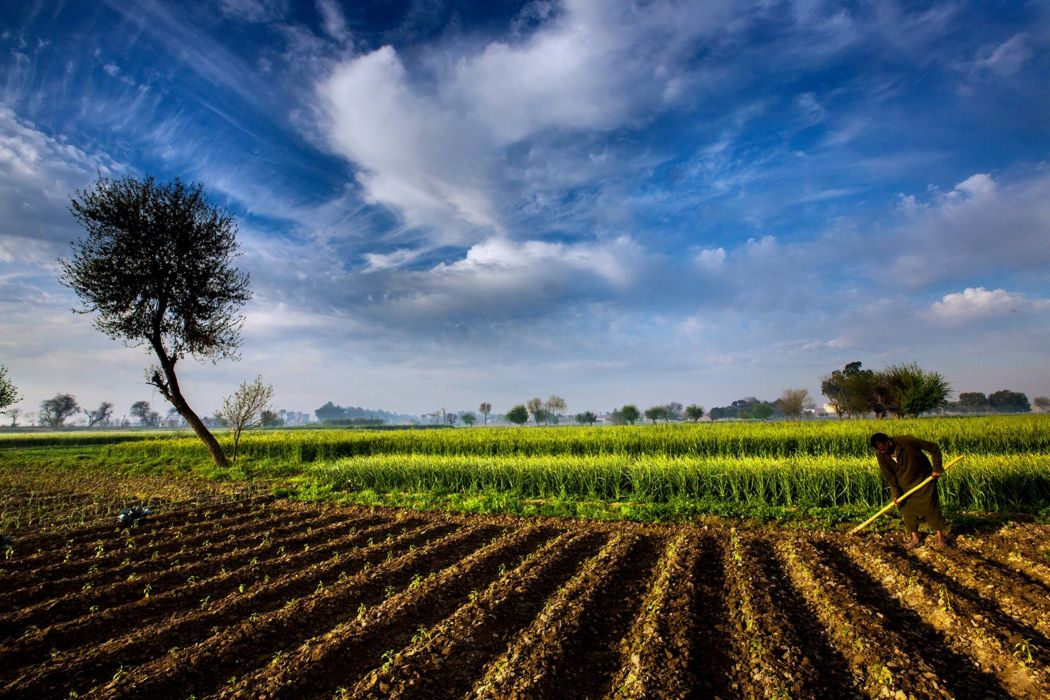 pakistan landscapes man Farmer Agriculture clouds sky trees fog nature countryside grass Plowing wallpaper