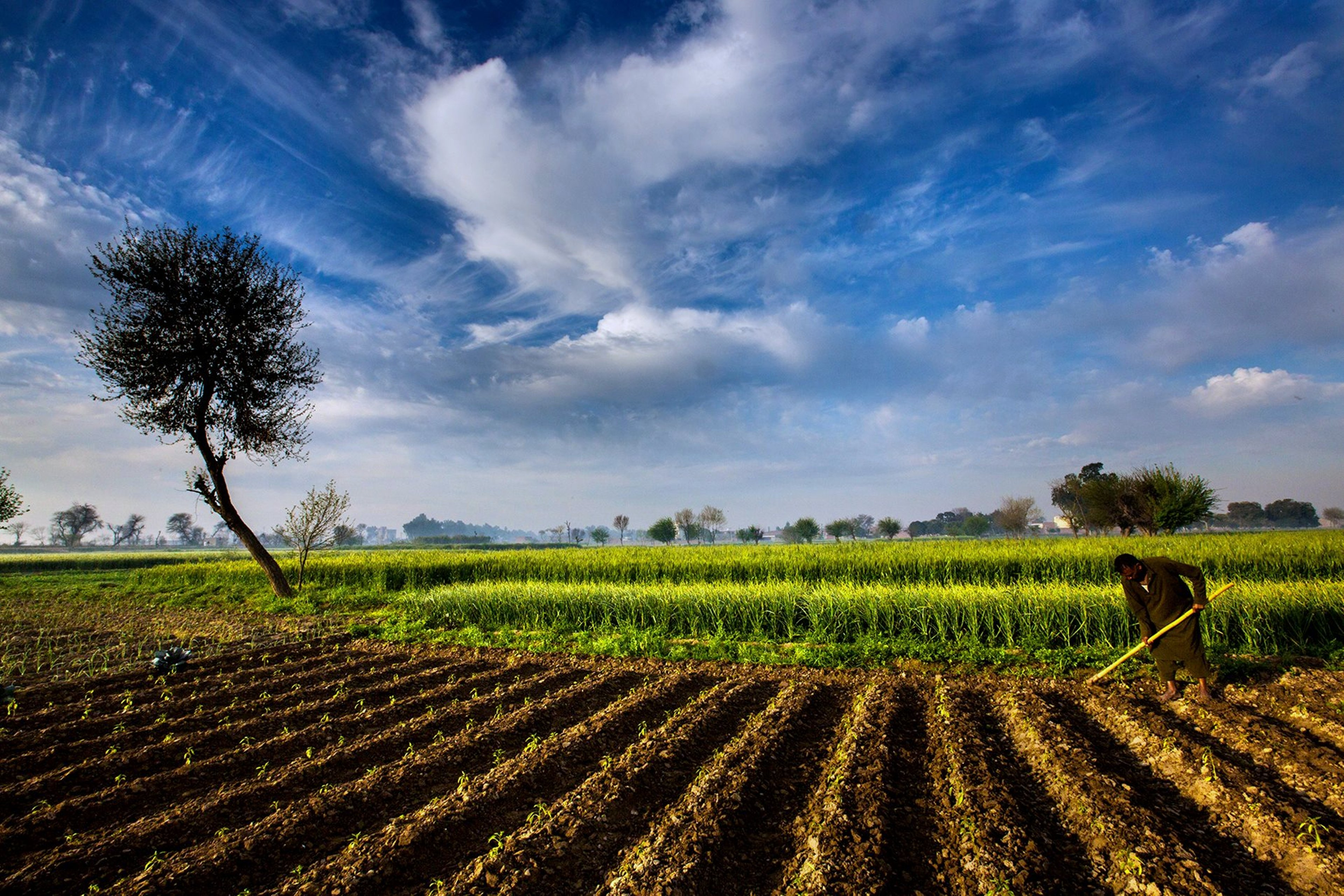 agriculture of pakistan Pakistan table of contents farming is pakistan's largest economic activity in fy 1993, agriculture, and small-scale forestry and fishing, contributed 25 percent of gdp and employed 48 percent of the labor force.