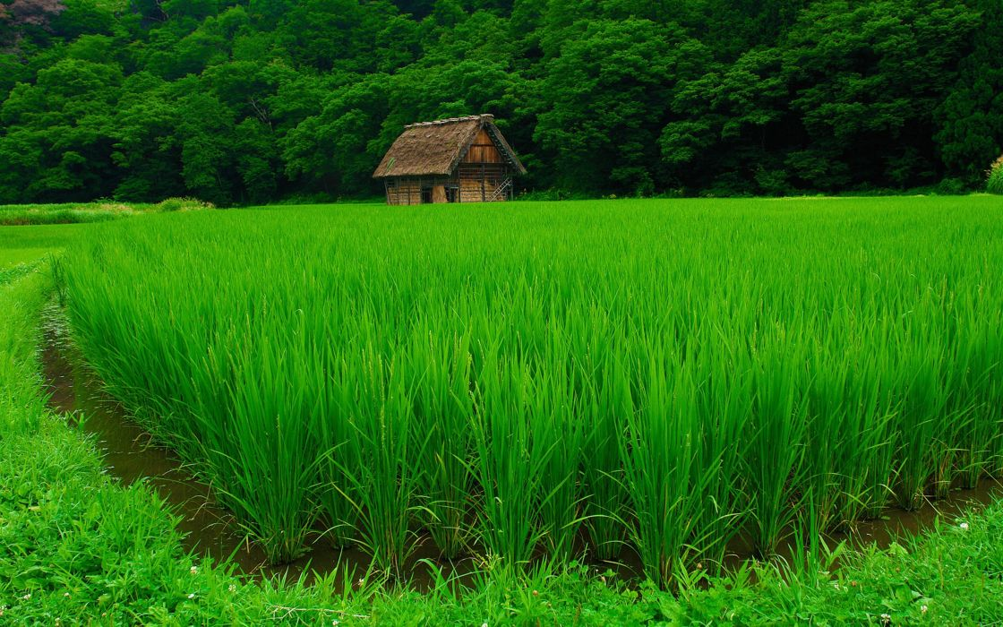 fields grass nature houses jungle forest green landscapes Agriculture countryside trees wallpaper