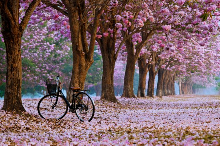 spring bike trees flowers roses nature landscapes leaves Bicycle romantic emotions wallpaper