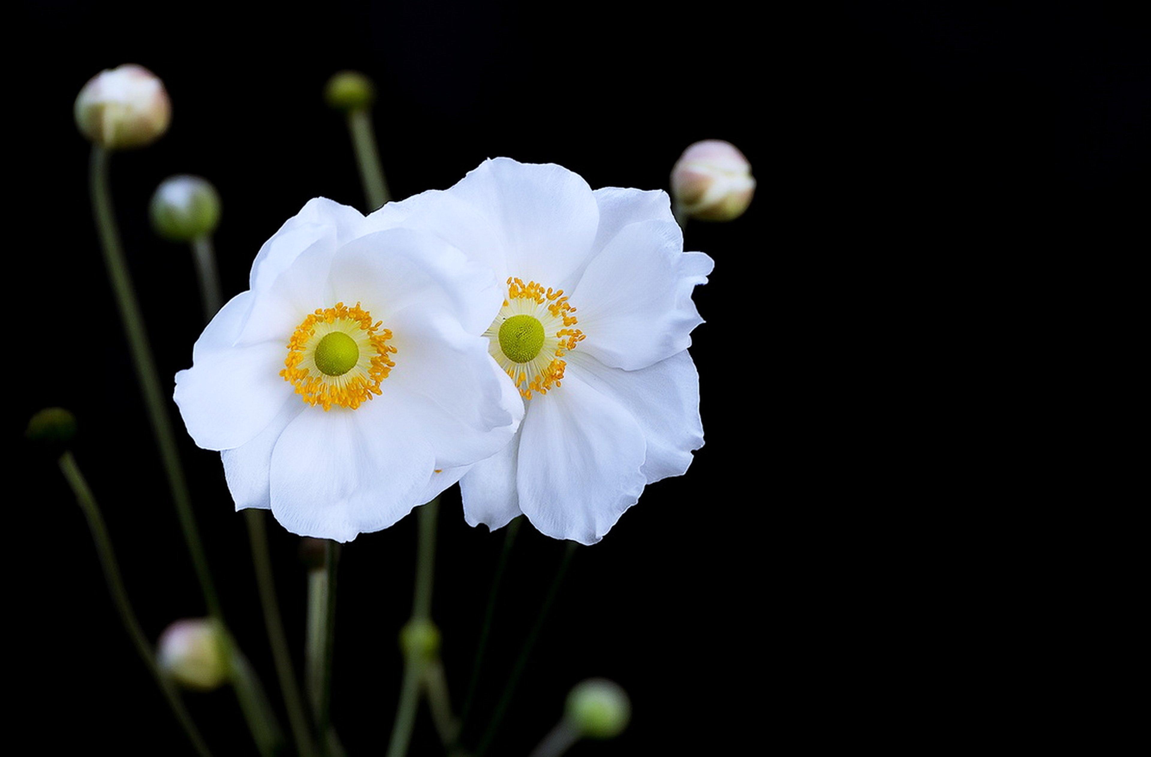 Flowers roses gardens nature spring landscape beauty tow ... White Rose Flower Garden Wallpaper