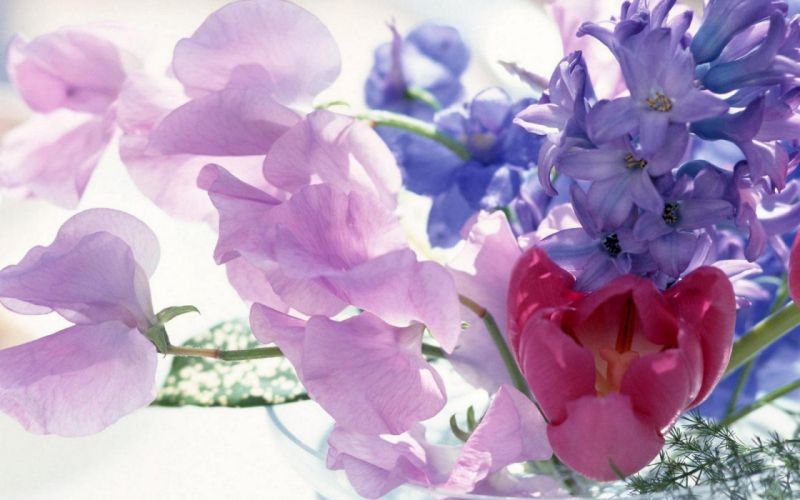 flower flowers petals garden nature plants beautiful delicate colorful soft spring 1920x1200 (65) wallpaper