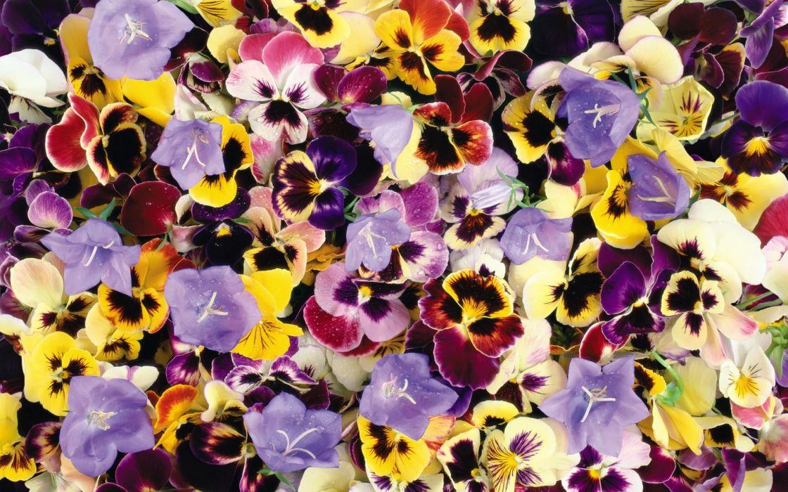 flower flowers petals garden nature plants beautiful delicate colorful soft spring 1920x1200 (193) wallpaper
