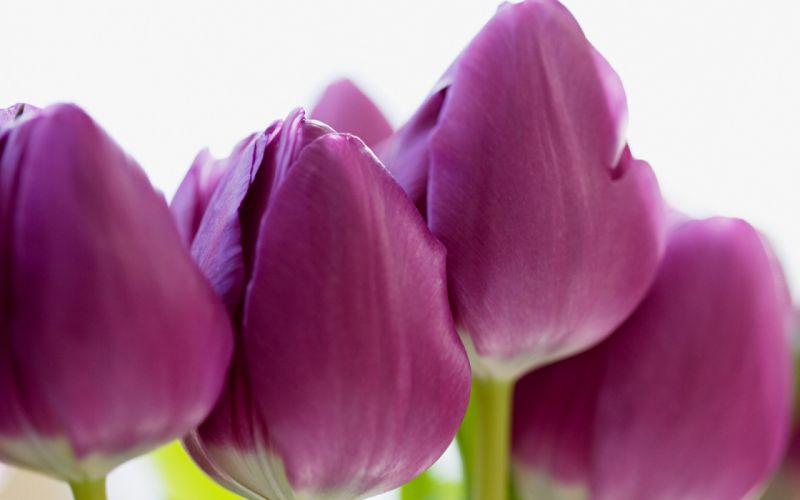 flower flowers petals garden nature plants beautiful delicate colorful soft spring 1920x1200 (204) wallpaper