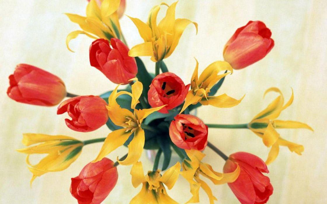 flower flowers petals garden nature plants beautiful delicate colorful soft spring 1920x1200 (209) wallpaper