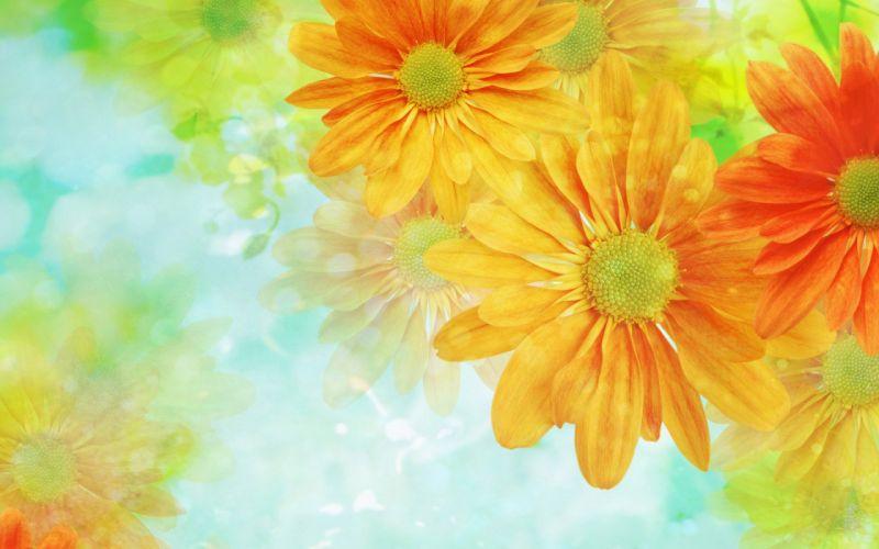 flower flowers petals garden nature plants beautiful delicate colorful soft spring 1920x1200 (214) wallpaper