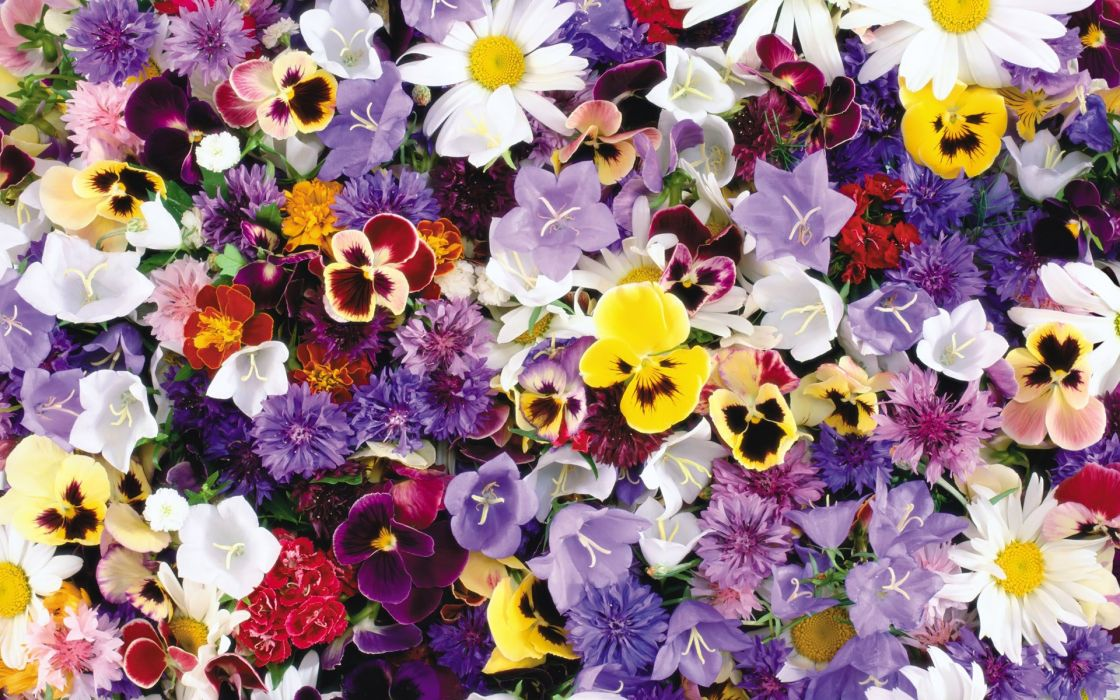 flower flowers petals garden nature plants beautiful delicate colorful soft spring 1920x1200 (234) wallpaper