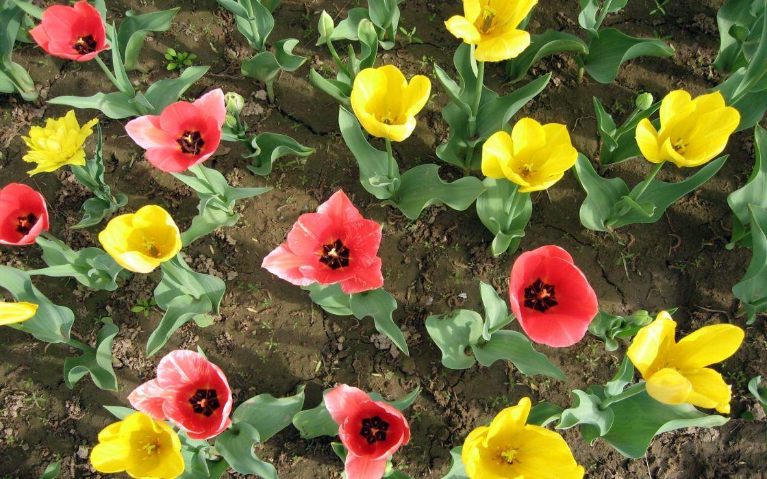 flower flowers petals garden nature plants beautiful delicate colorful soft spring 1920x1200 (240) wallpaper
