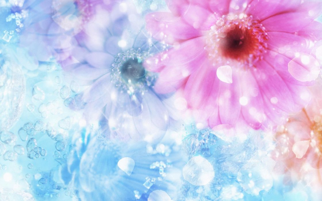 Free Colorful Flower Wallpaper Downloads: Flower Flowers Petals Garden Nature Plants Beautiful