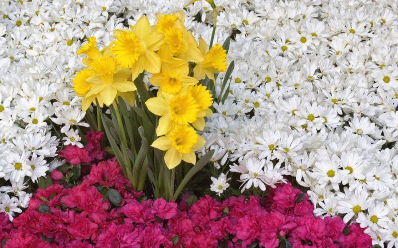 flower flowers petals garden nature plants beautiful delicate colorful soft spring 1920x1200 (254) wallpaper