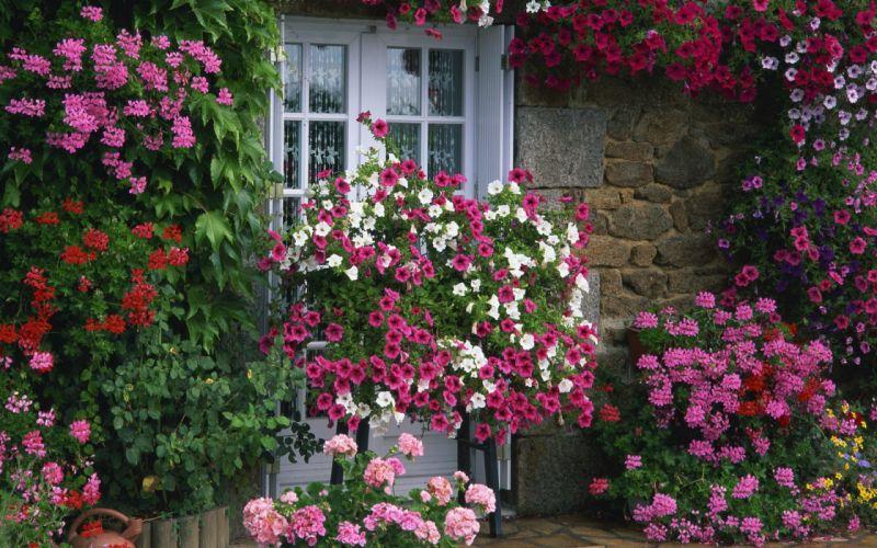 flower flowers petals garden nature plants beautiful delicate colorful soft spring 1920x1200 (270) wallpaper