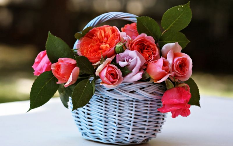 basket Beauty emotions Flowers gardens life love nature romance roses Spring wallpaper