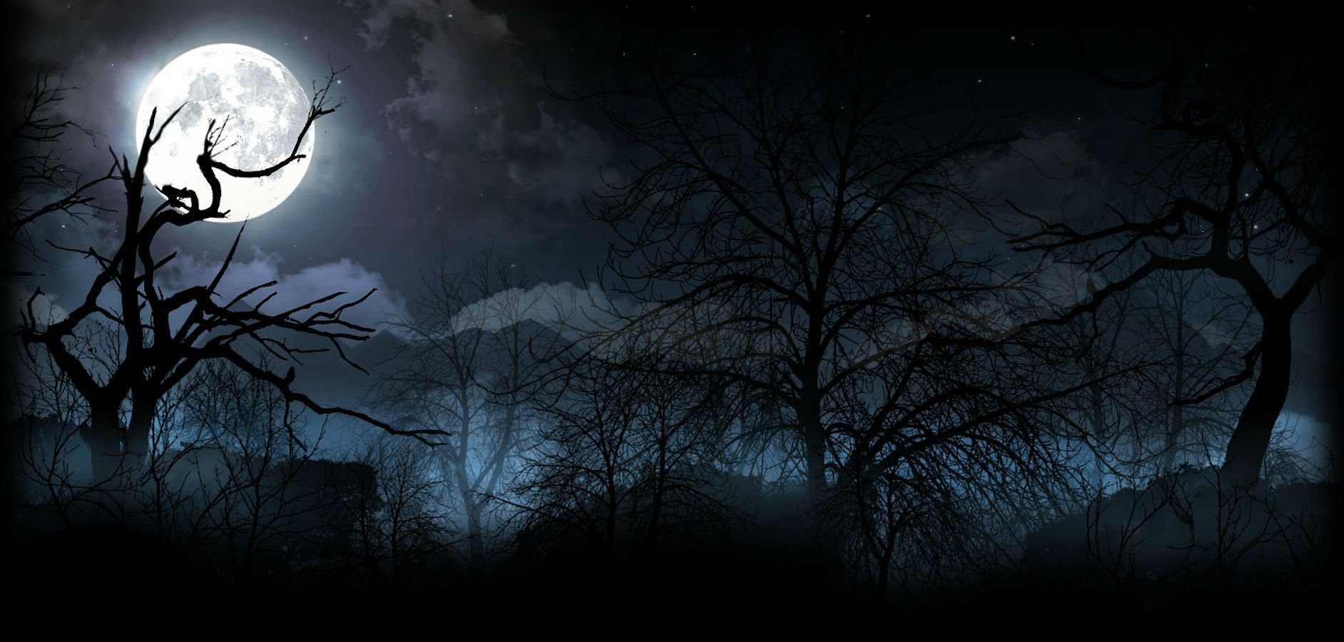 spooky forest wallpaper - photo #18