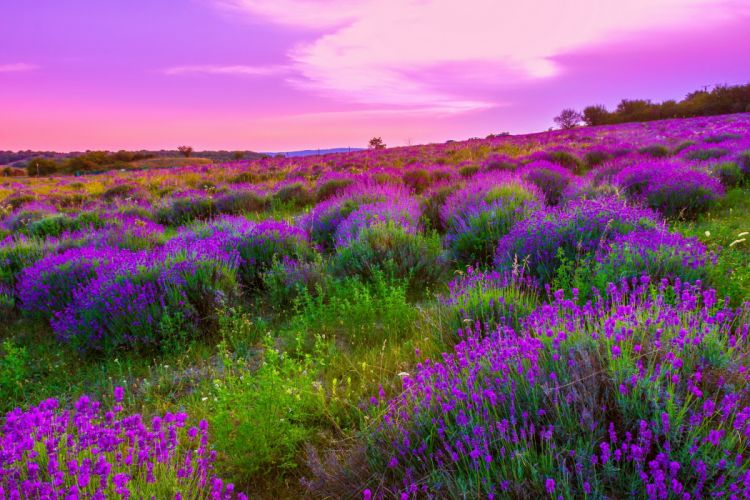 sky pink colorful flowers plants spring landscape nature emotions romantic countryside clouds wallpaper