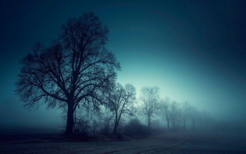 mist field trees mist sunrise wallpaper