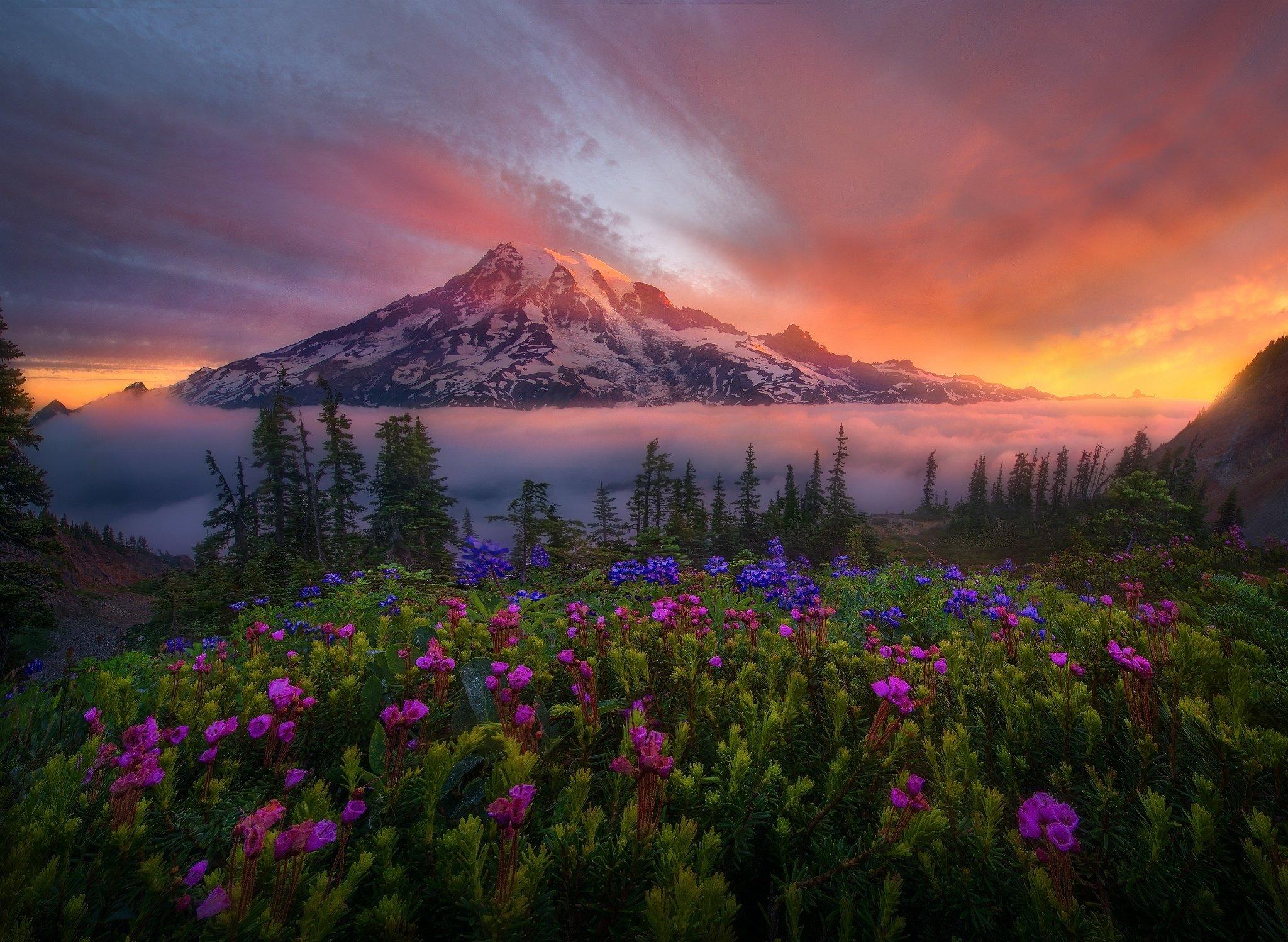 sunrise mountains flowers - photo #4