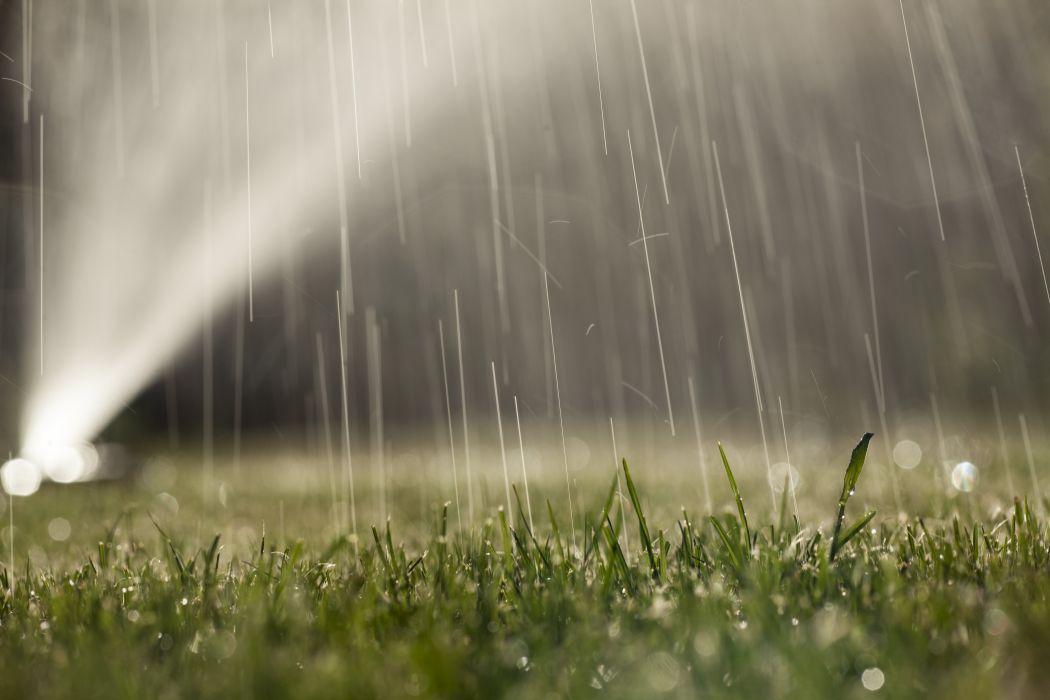 water grass drops dew grass wallpaper