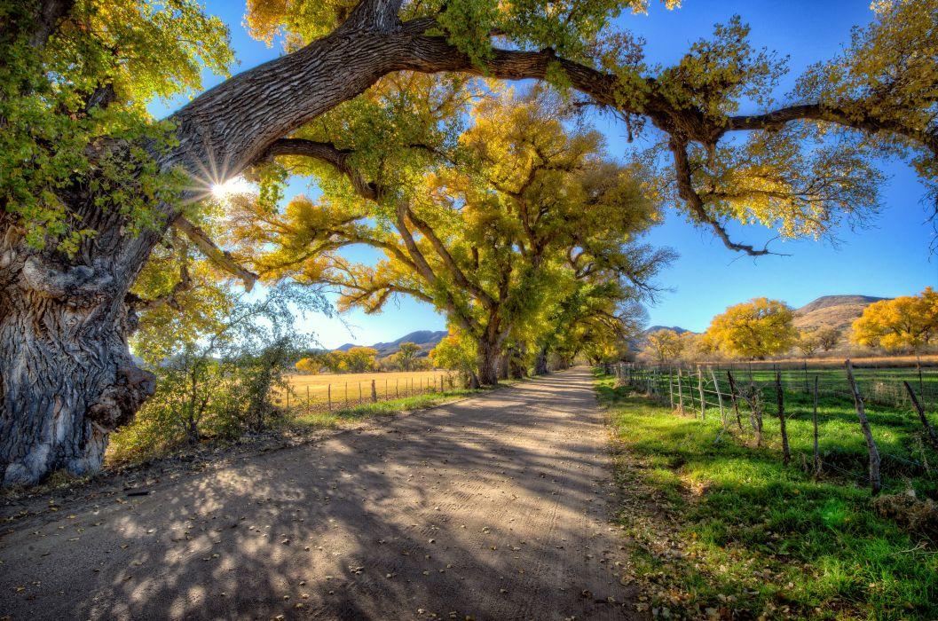 road trees sun Scully Valley Arizona USA Skull Valley Arizona wallpaper