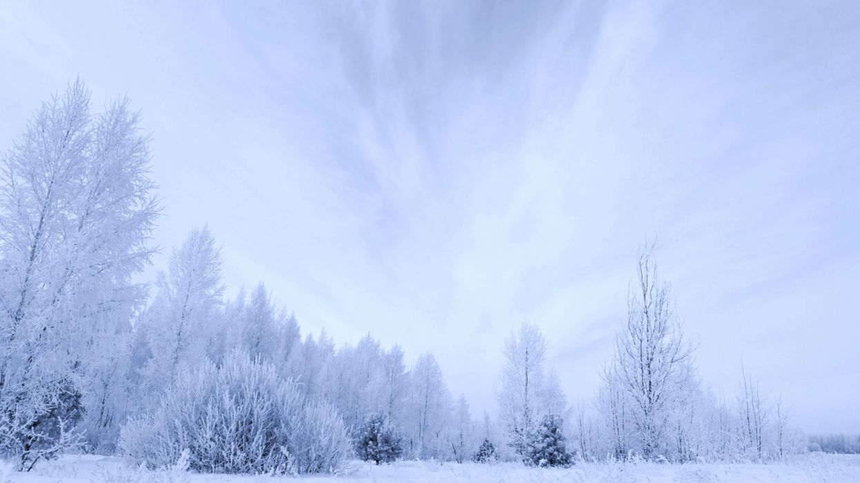 white winter trees snow sky clouds forest countryside landscapes nature earth wallpaper