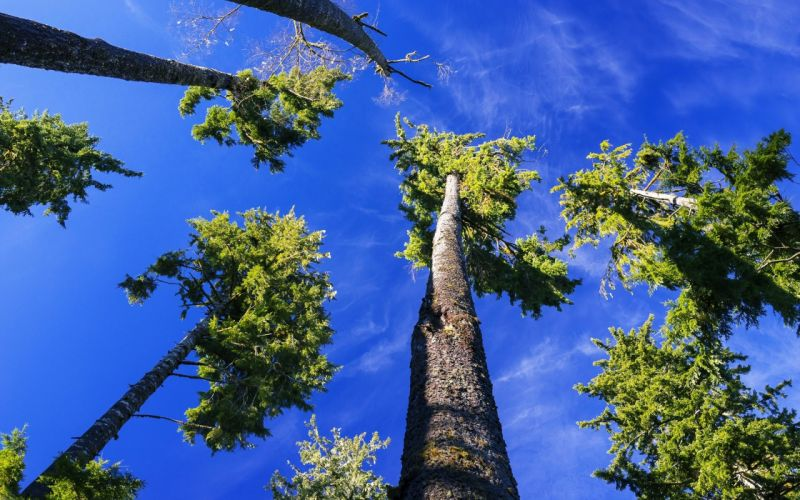 high trees sky blue clouds landscapes nature jungle earth wallpaper
