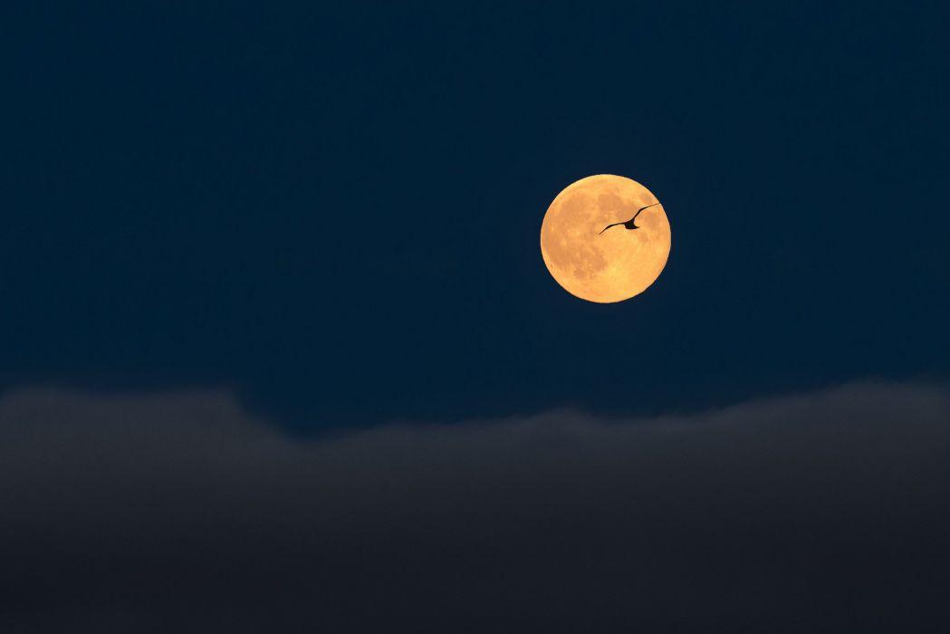 full moon sky clouds birds flight silhouette landscape mood bokeh wallpaper