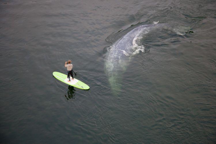 ocean athlete man board whale wallpaper