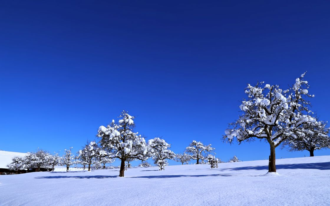 landscapes nature earth snow sky sunny blue trees cold winter countryside wallpaper