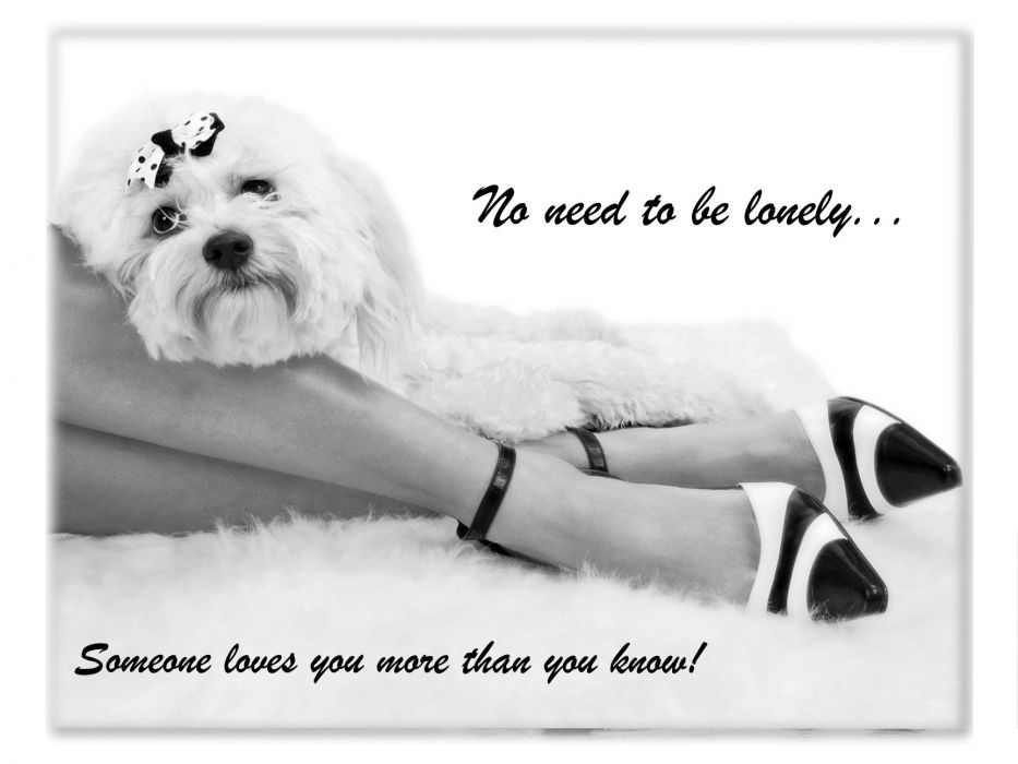 lonely mood sad alone sadness emotion people loneliness Solitude poster legs dog girl wallpaper
