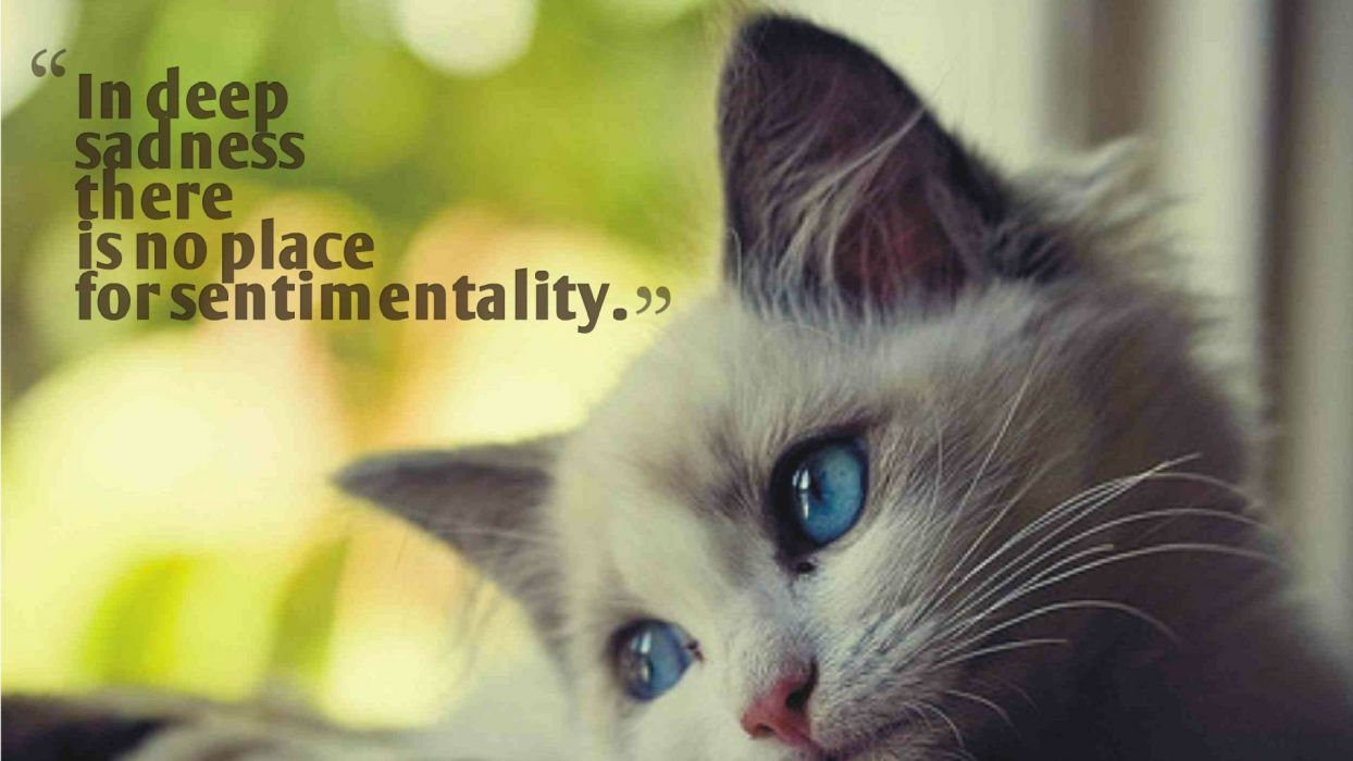 lonely mood sad alone sadness emotion people loneliness Solitude sorrow kitten cat typography text quote wallpaper
