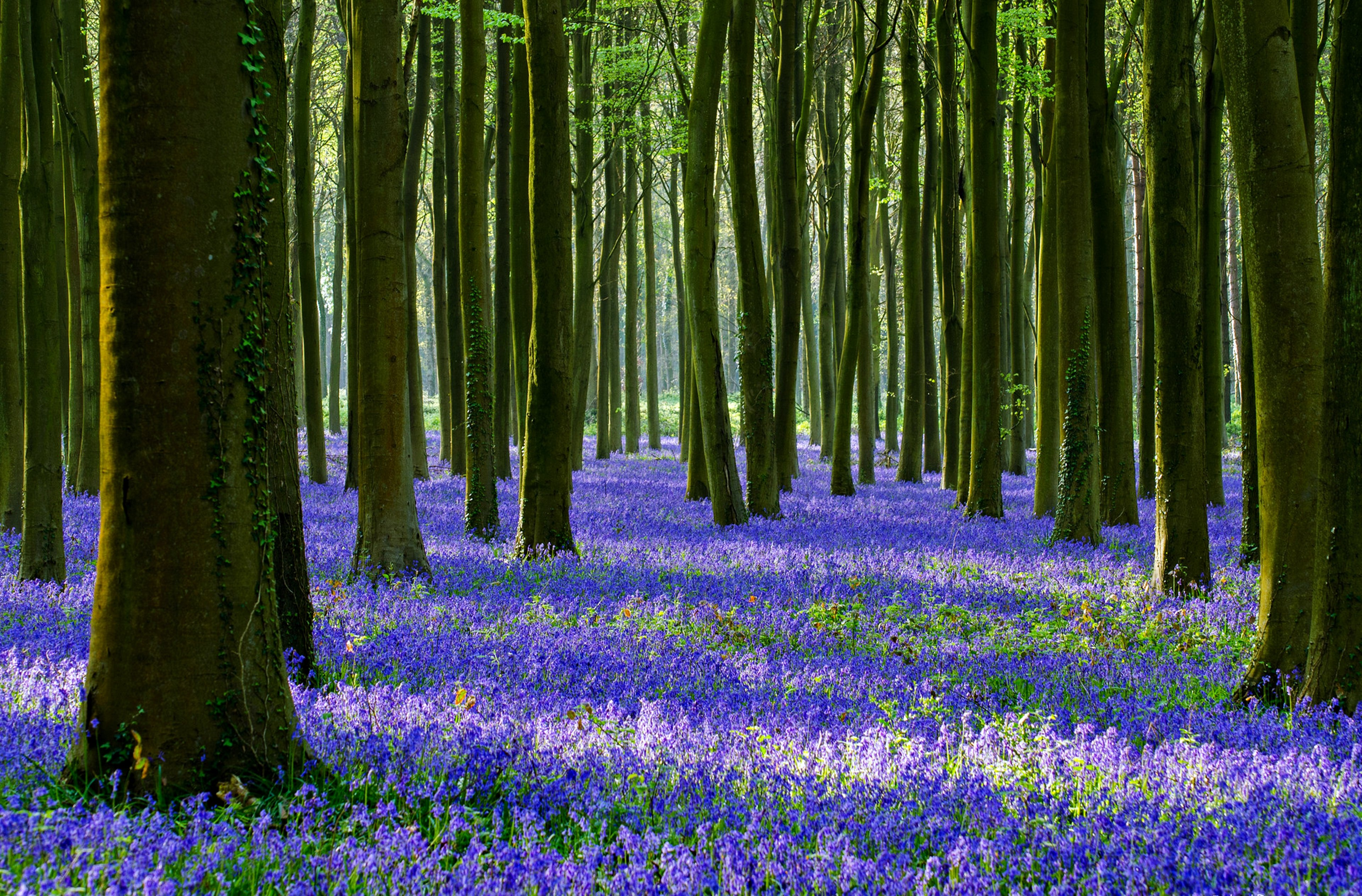 forest flowers wallpapers - photo #12
