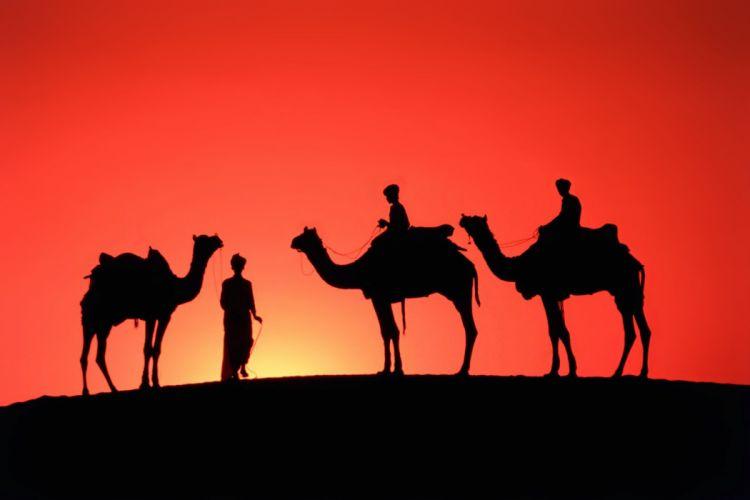 desert sand camels people travel orange sunset emotions nature earth landscapes wallpaper