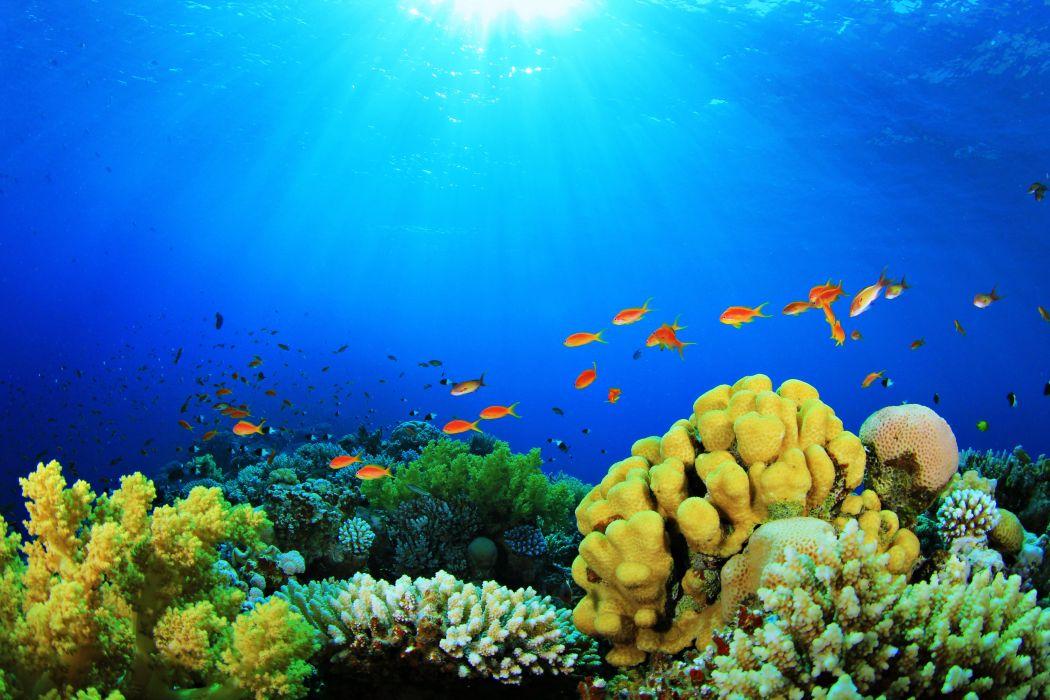 sea fish Depths Aquarium nature colors plants Coral algae sun wallpaper