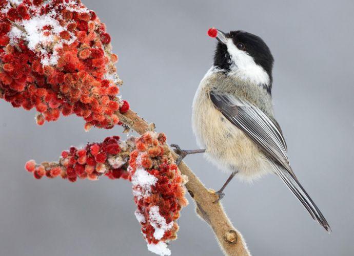 birds bird s wallpaper