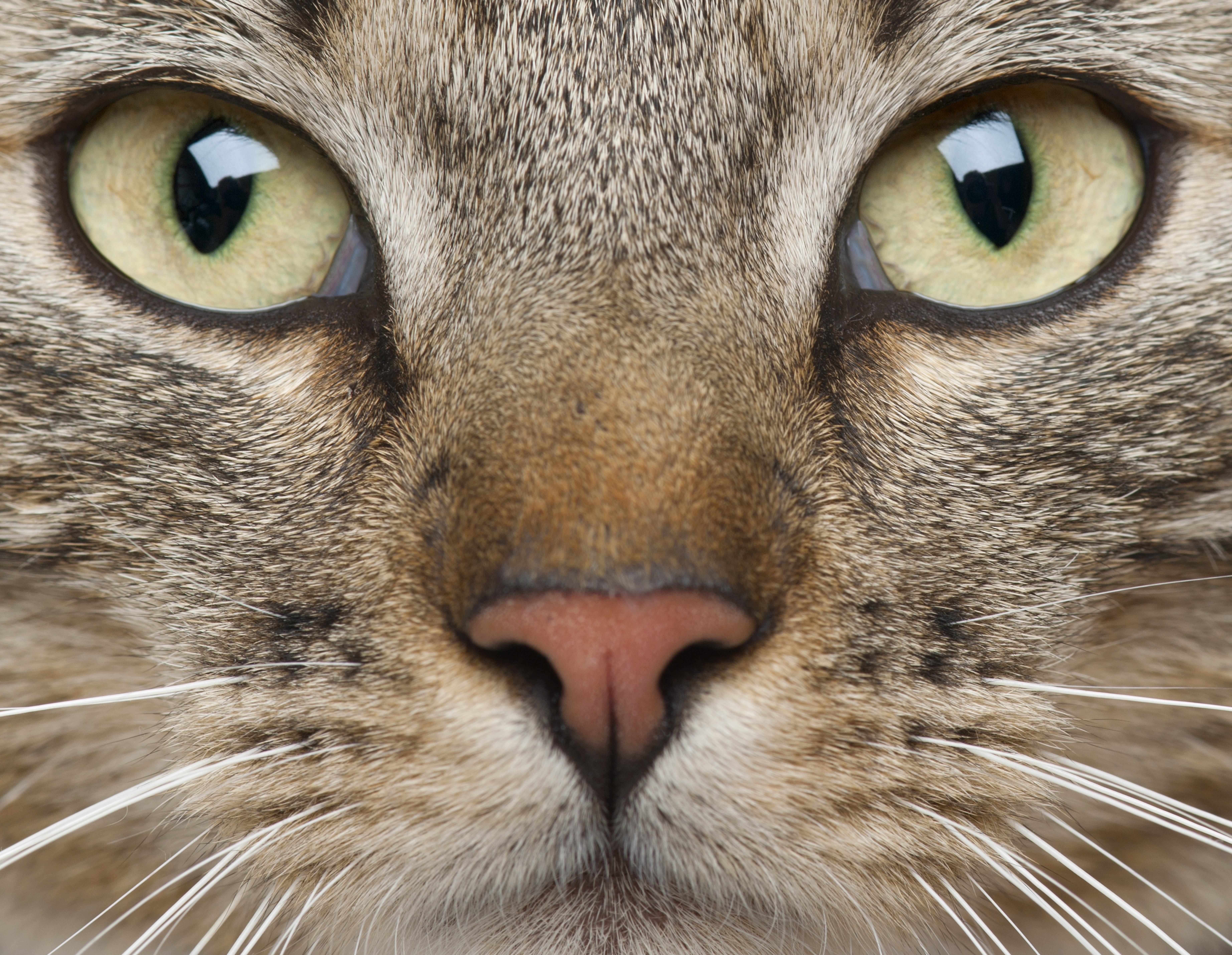 how to clean cat muzzle