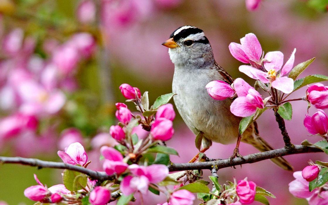 birds bird wallpaper
