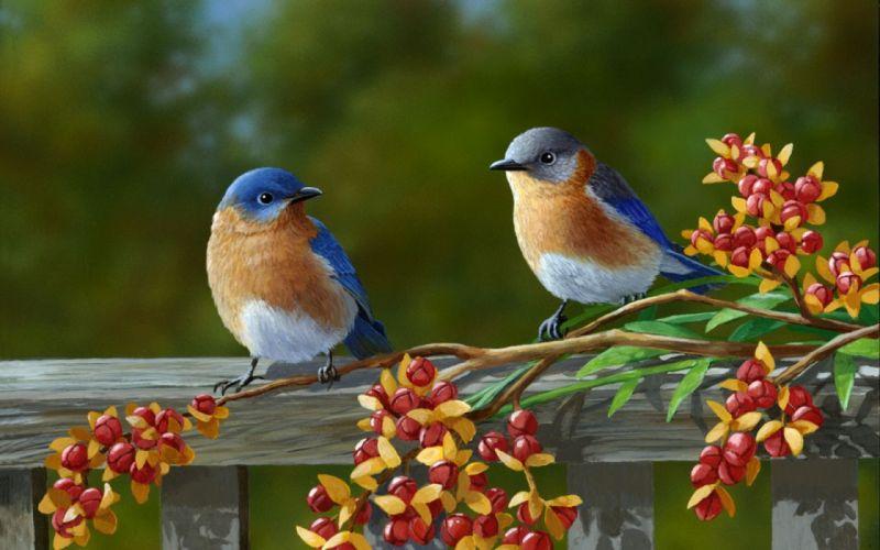 birds bird artwork f wallpaper