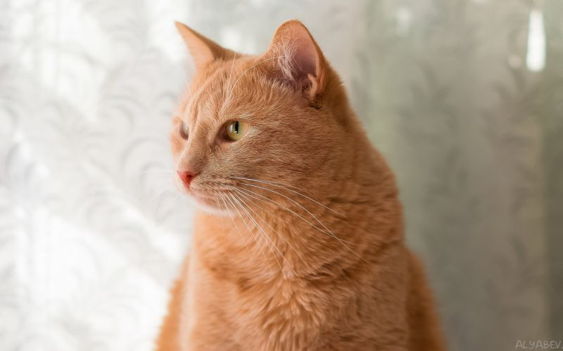 cat cats feline hr wallpaper