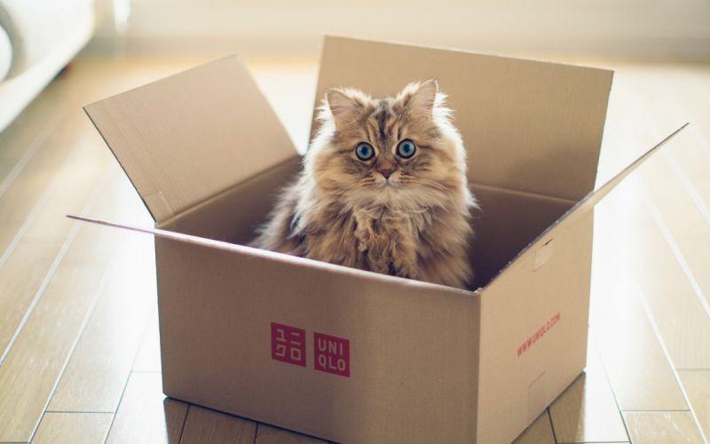 cat cats feline eyes g wallpaper