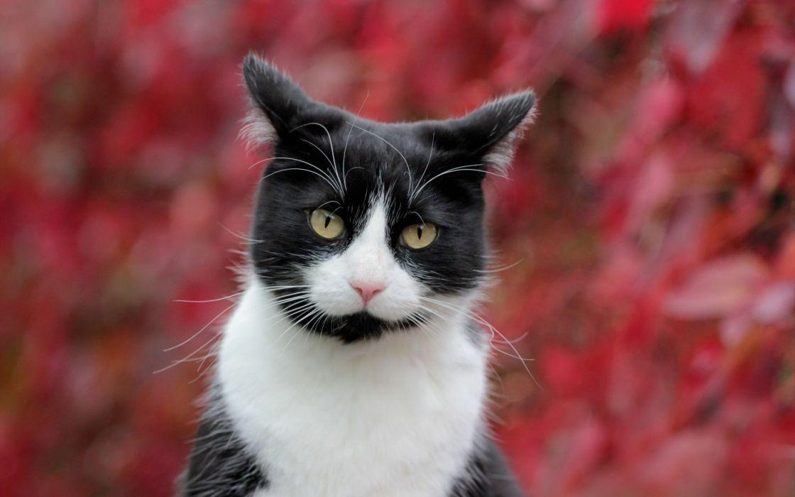 cat cats feline e wallpaper